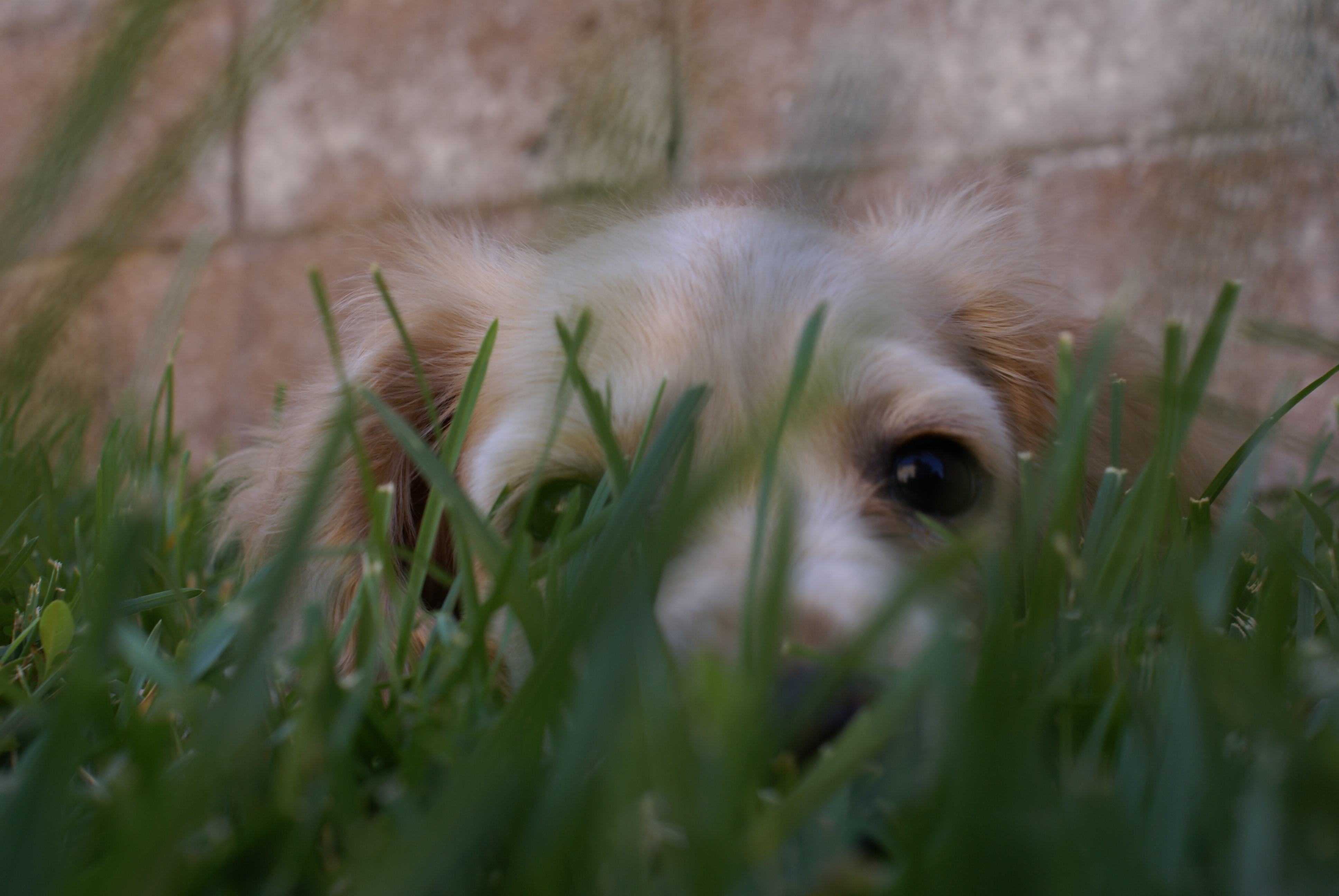 Lady Matilda (aka Matty) waiting in the grass before attacking the camera.
